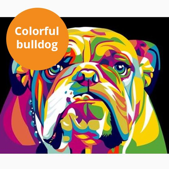 colorful bulldog