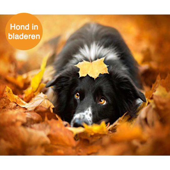 hond in bladeren