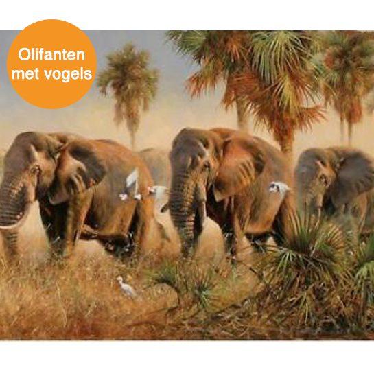 olifanten met vogels