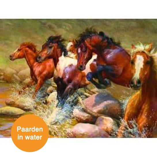 paarden in water