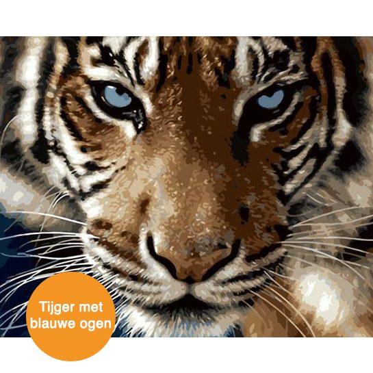 tijger met blauwe ogen