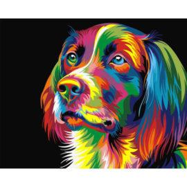Colorful Stabij