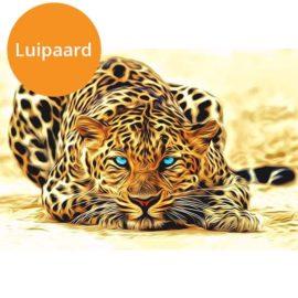 Luipaard (1)