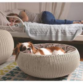 Curver Huisdieren Hond