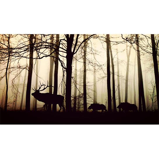 Forest Fotograaf Anja[1]