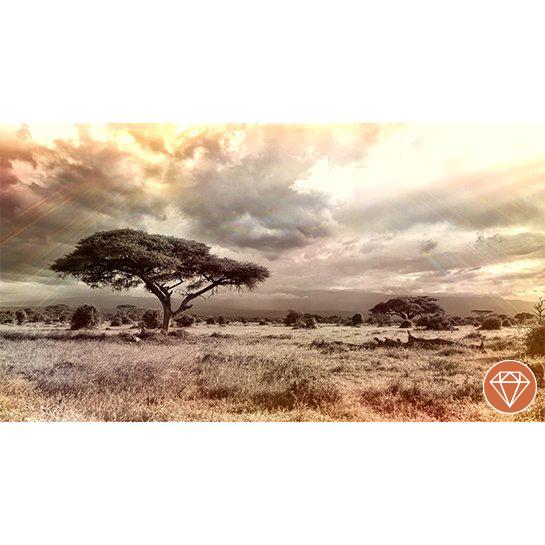 Xafrika Savanna Fotograaf Anja1