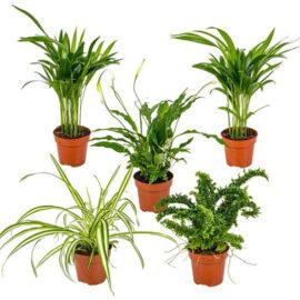 Bl 353 Mix Van 5 Luchtzuiverende Kamerplanten Chlorophytum 2x, Asplenium, Spathiphyllum, Nephrolepis ⌀12 Cm ↕35 Cm 1